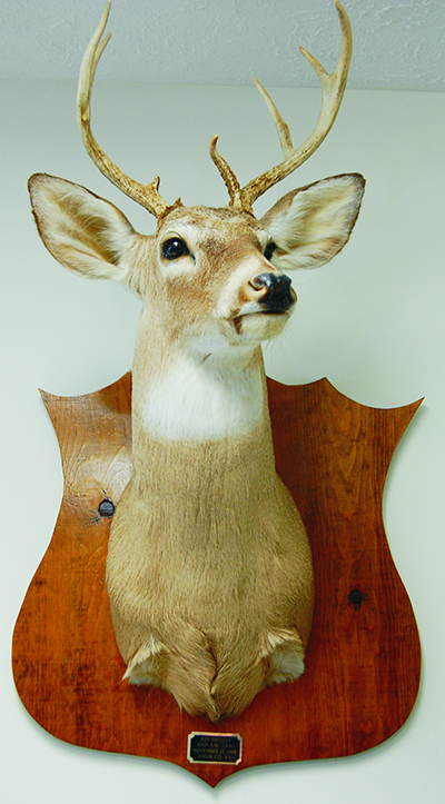 Taxidermy Display 2